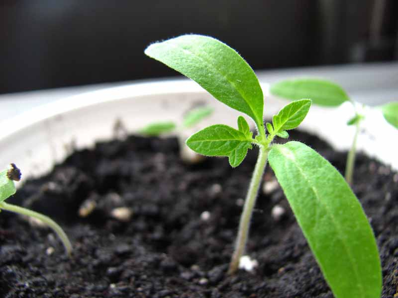Feed Me, Seed More | Garden City Life
